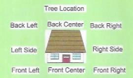 Tree Location