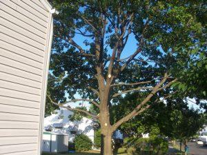tree elevating