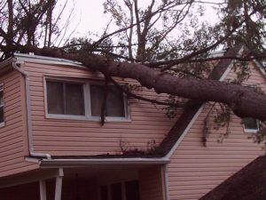 tree emergency services